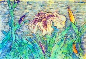 Bearded Iris: art from imagination